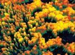 lidar forest
